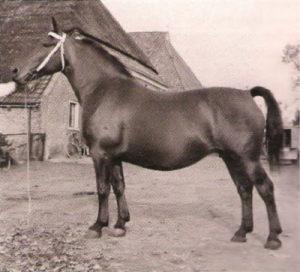 Freiminka in 1950